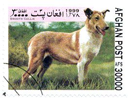 Timbres Afghanistan chiens Collie Smooth - 2 ex     ========================= Image.=> http://wamiz.com/chiens/colley-a-poil-court-152 ========================= Afghanistan 1999 - Chiens LOUPE => https://fr.pinterest.com/pin/121526889922063168/ ========================= Valeur faciale = 30000.  Cotation.=.0,10.€ ========================= Bonjour, pour les bijoux Gaby Féerie => http://www.alittlemarket.com/boutique/gaby_feerie-132444.html