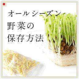 オールシーズン野菜の保存方法