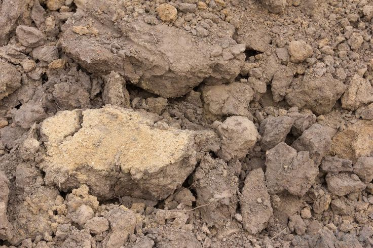 Clay loam is a mixture of soil that has more clay than any other types of rocks or minerals. It's hard to work with, since it...