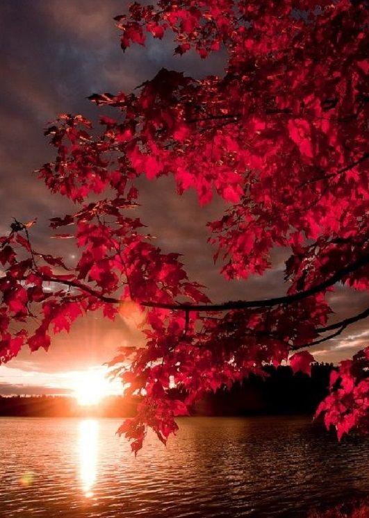 Balatoni bámészkodás - Őszi napok, amikor a világ olyan, mintha kristályból készült volna… Minden zeng a fényben. A Balaton part fái csodálatos színekben pompáznak. A tó vize sárgászöld színű, szinte üvegszerű. Egy fuvallat leszakítja a környező nagy hársak és platánok lombját és aranyesővel szórja tele a part menti vízfelszínt. A látvány elképesztő… (Németh György)