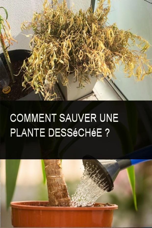 Comment Sauver Une Plante Dessechee Plante Astuce Jardin