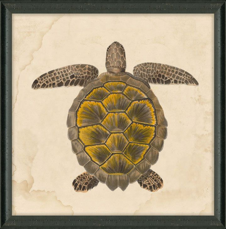 19 best images about sea turtle art and home decor on for Turtle decorations for home