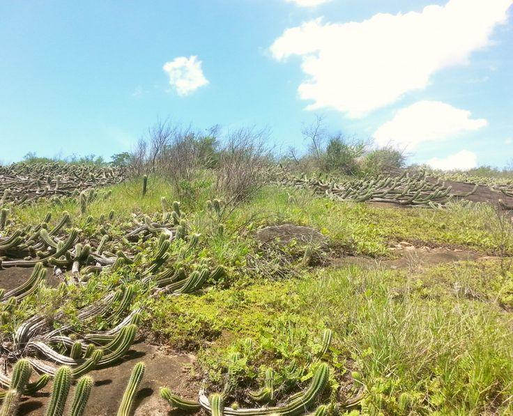 venha Mirante dos Cactus - Vila Velha  #AppLagoaEncantada #cactus #caminhada #CaminhadaMédia #como #das #dos #EspiritoSanto #lagoa #nao #para #paraísoescondido #por #que #quem #seu #tem #trilhas #ValeEncantado #velha #vila #VilaVelha