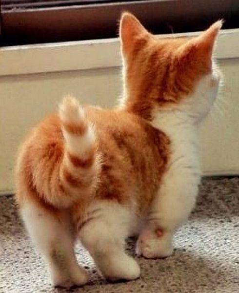 helping cat gain weight