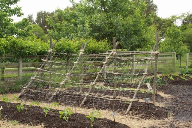 Veggie trellising ideas from longwood gardens fine for Vegetable garden trellis designs