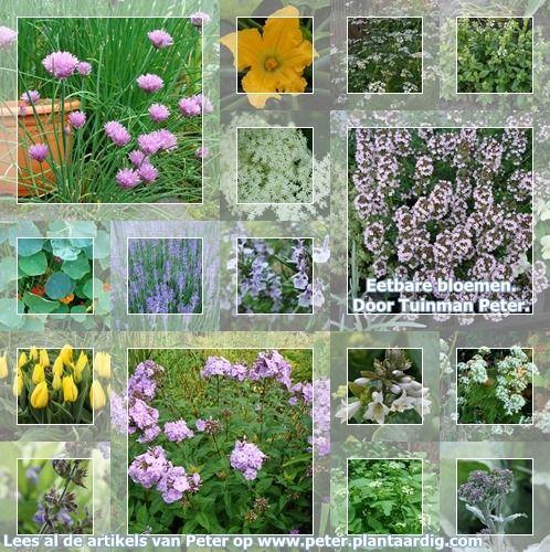 eetbare bloemen uit de tuin