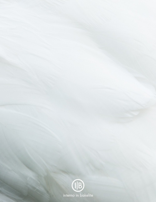 Il cigno bianco @internoinbakelite.wordpress.com