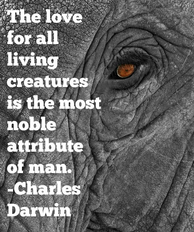 Darwin Quotes: 16 Best Charles Darwin Quotes Images On Pinterest