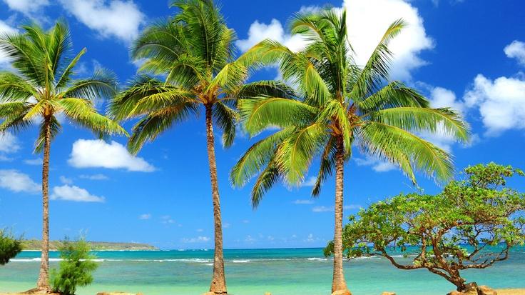 Mare; rocce; palme; mare, albero.