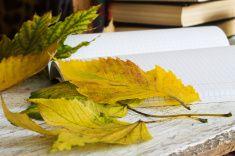 Желтые Осенние листья в размытым фоном журналы и книги stock photo