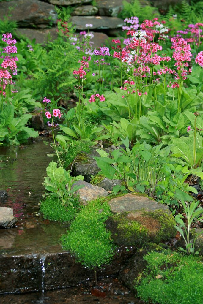 1000 images about gardens ponds waterfalls streams for Garden pond specialists