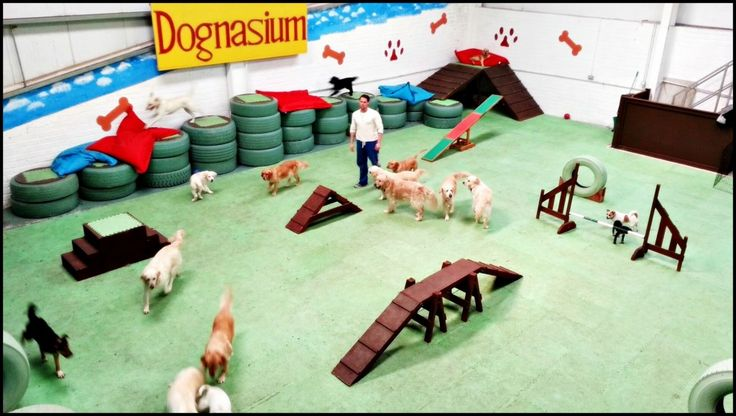 Dog Daycare Play Equipment Doggie daycare arial                                                                                                                                                     More