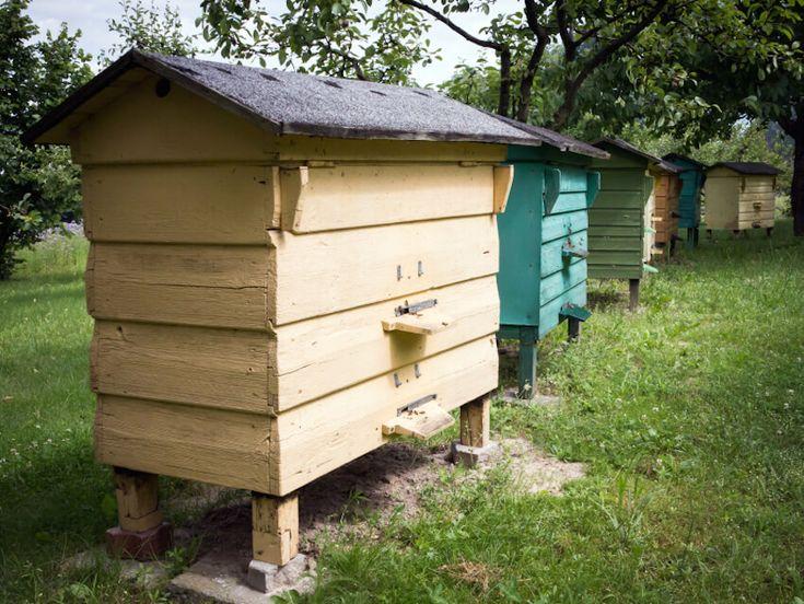 29 Beautiful Backyard Bee Hives | Backyard, Bee, Beautiful