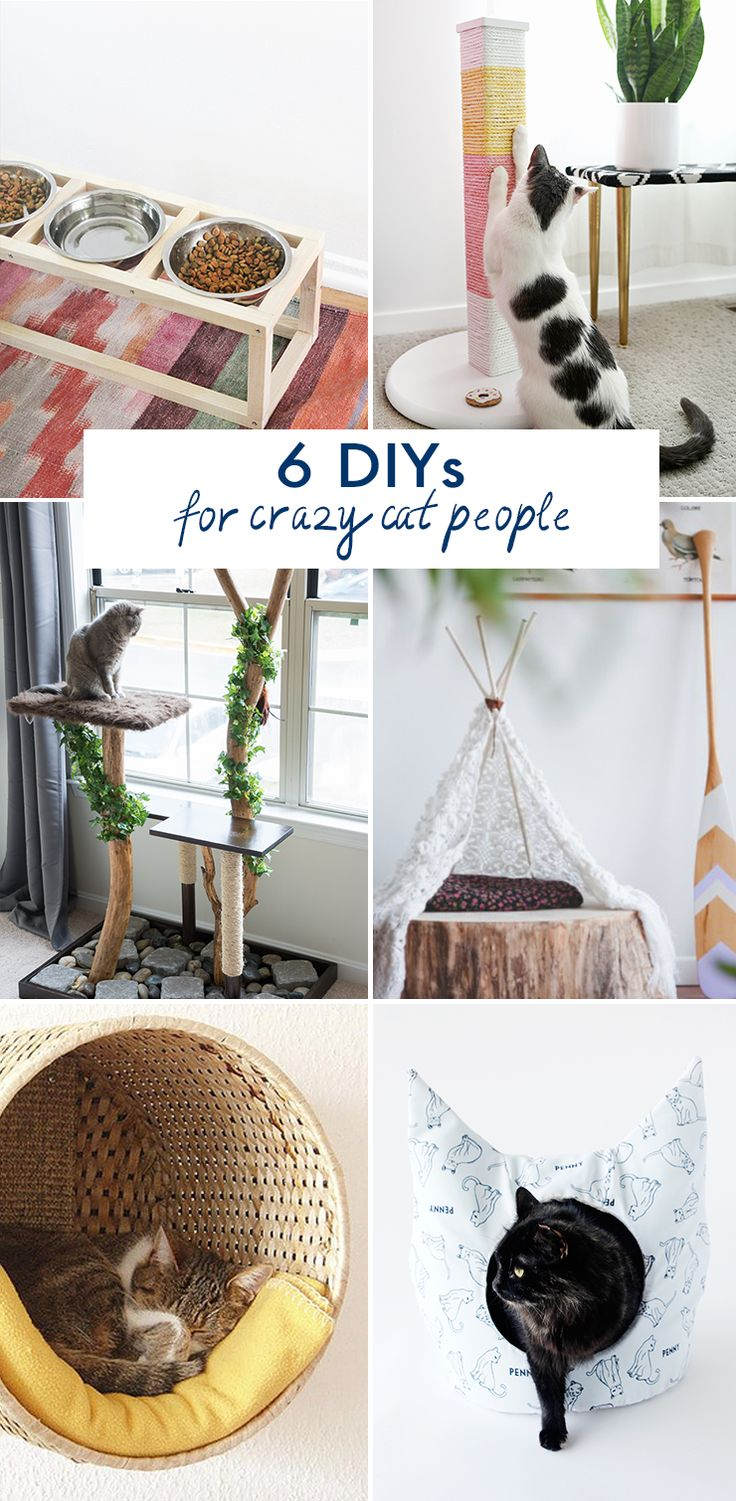 6 DIYs for Crazy Cat People @idlehandsawake