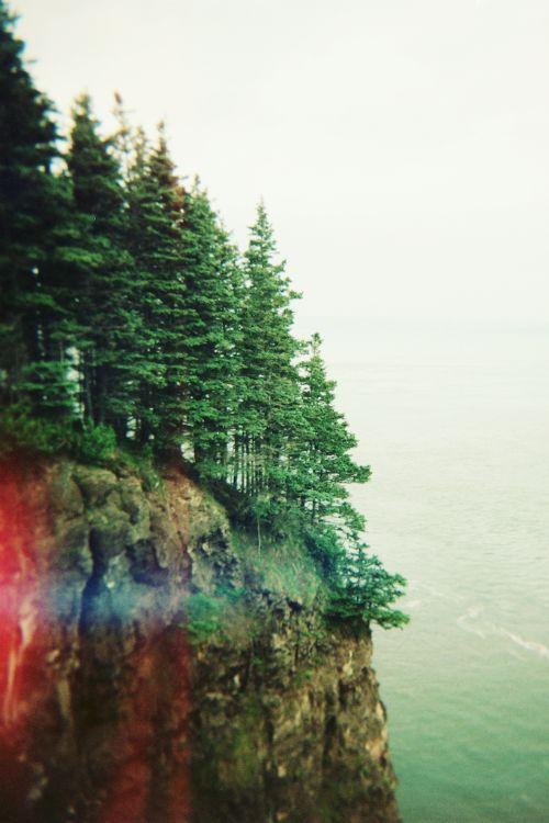 : Forests, Adventure, Nova Scotia, Beautiful, The Edge, Trees, West Coast, Natural, Photography