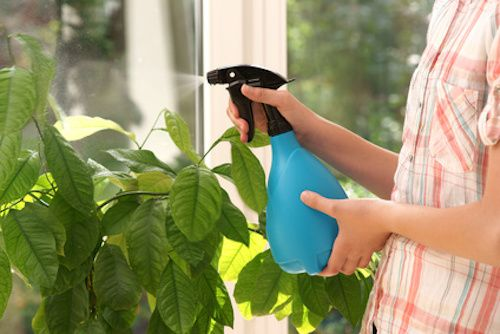 Comment se débarrasser des pucerons ? Marre des pucerons qui envahissent vos plantes ? Découvrez ce traitement naturel qui va éradiquer les pucerons.
