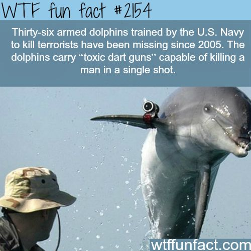 The U.S. Navy dolphins - WTF fun facts