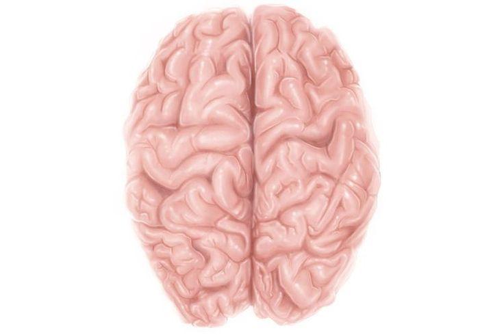 Brain Anatomy: Cerebral Cortex