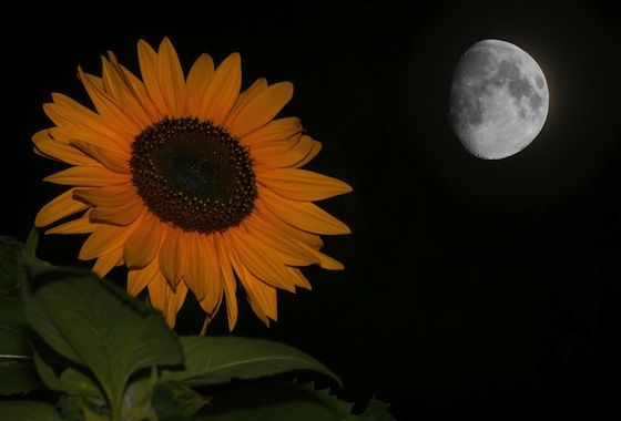 Full Flower Moon for May
