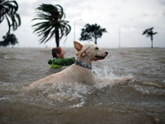 It seems unwise to go swimming with your dog during a Hurricane ...