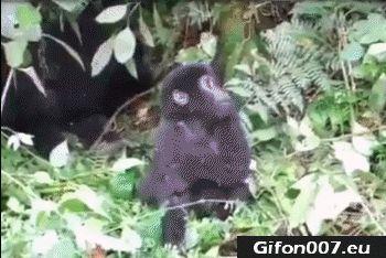 Funny Monkey, Jungle, Video, Gif