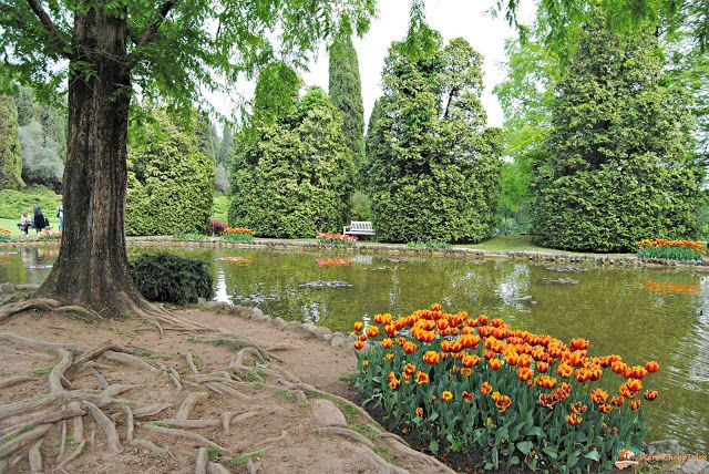 Parco Giardino Sigurtà, una visita tra i tulipani