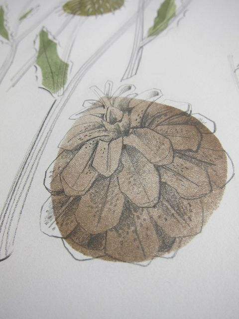 Pine cone detail by St. Jude's, via Flickr, Angie Lewin