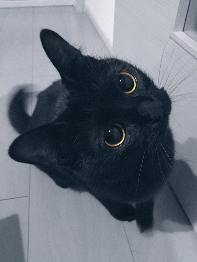 「可愛い」以外の語彙力が消えた あまりに可愛い黒猫ちゃん  –  grape [グレイプ]
