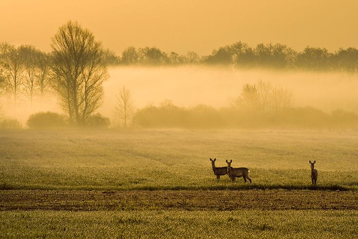 58 best images about alba sunrise on pinterest portal for Deer scenery