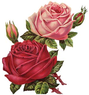 Pink and red roses ~ .png image