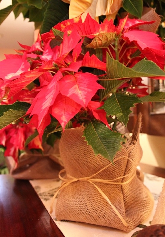76 best poinsettia and holly images on pinterest | christmas