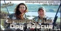 Smokin Gun Dog Rescue in Saskatchewan website link on http://www.bestcatanddognutrition.com/roger-biduk/canadian-animal-rescues-shelters/ Roger Biduk