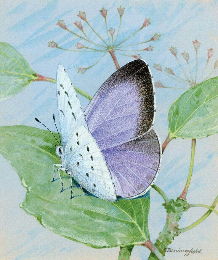 Realistic butterfly paintings - photo#49