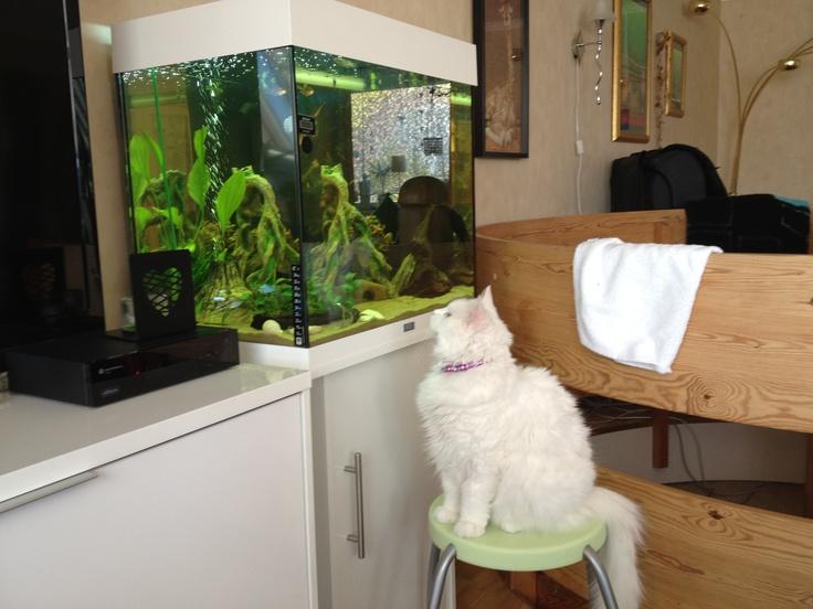 Amalie watching tv :)