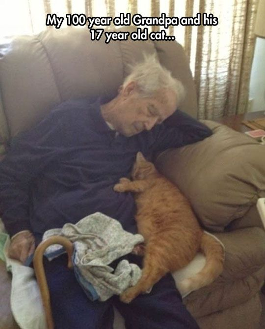 How sweet, I hope if and when I'm old old old I still have a cat to sleep with me…