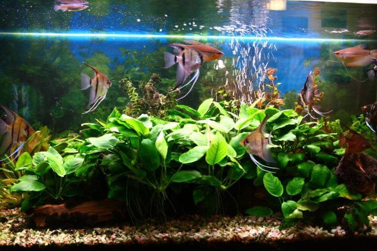Pořizujeme rybičky (I.): Jaké akvárium vybrat?