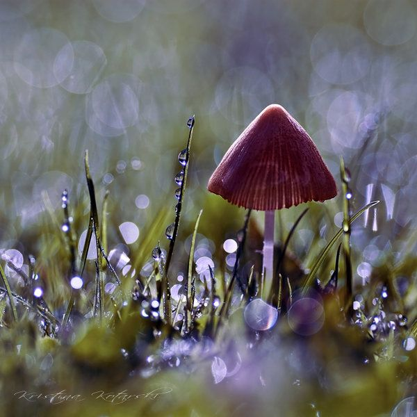 : Bokeh Photography, Mushrooms Magic, Magic Mushrooms, Fairies, Mushrooms Fungi Lichen, Midsummer Night Dreams, Wild Mushrooms, Mushrooms Fungus Lichen, Natural