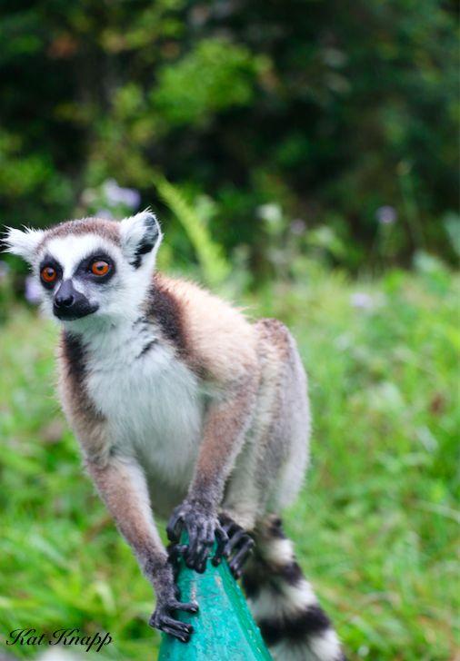 A lemur in Madagascar jumping on my canoe