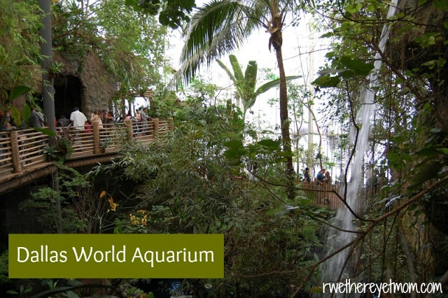 Dallas World Aquarium ~ Dallas, TX - R We There Yet Mom? | Family Travel for Texas and beyond...