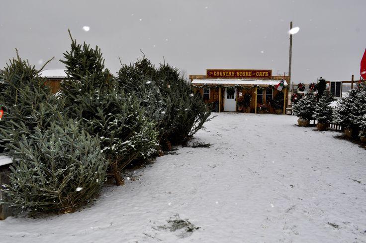 7 Best Christmas Tree Season Images On Pinterest
