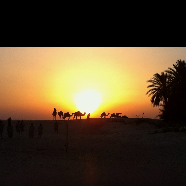 Tunisian camel ride