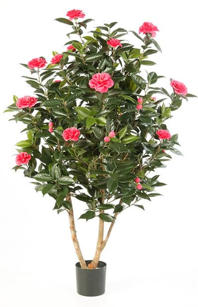 artificial camelia tree landscaping products designs trees and artificial tree
