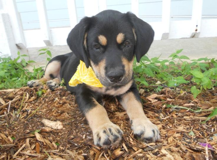 Adoption www facebook com bigdogranchrescue big dog ranch rescue