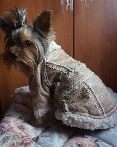 Luna, frumoasa si dragalasa in noul ei Cojocel de la King Maru --> https://kingmaru.ro/  #hainecaini #accesoriicaini #imbracamintecaini #caine #caini #catel #catei #dog #dogs #kingmaru