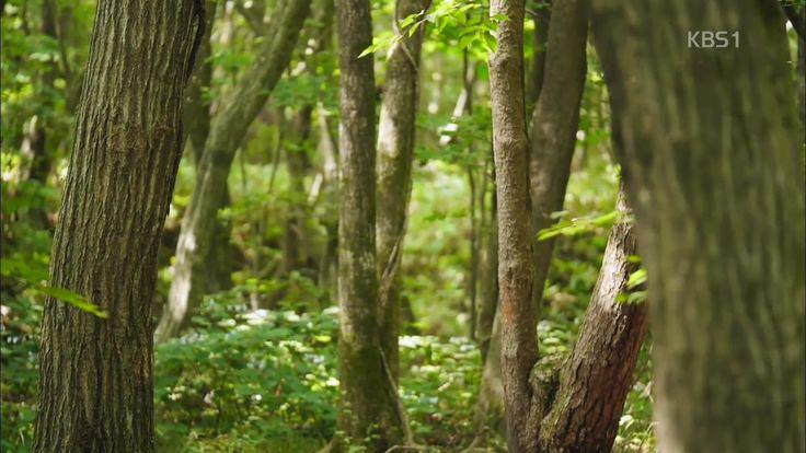 2014.07.30 [뉴스광장 영상] 사려니숲길 / 권순두