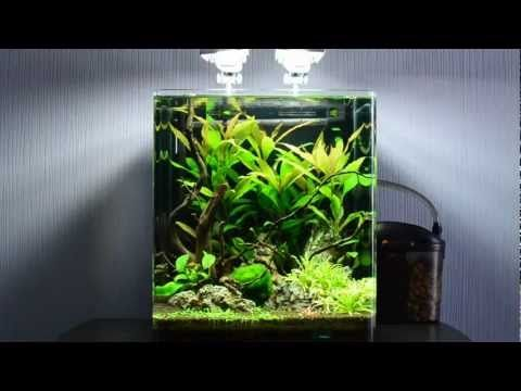 Welcome to my nano cube red bee shrimps youtube for Aquarium nano cube