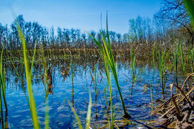 Ébredő természet | Long-erdő Természetvédelmi terület,Sár… | Flickr