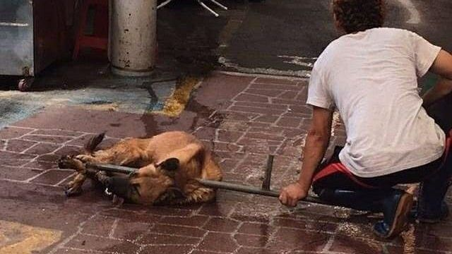Petition update · [Call for Action] Busan Gupo Dog Meat Market's Cruelty. · Change.org / https://www.change.org/p/amend-the-constitution-for-the-betterment-of-all-animals-end-the-dog-meat-trade-in-south-korea/u/21238498?utm_medium=email&utm_source=petition_update&utm_campaign=130323&sfmc_tk=6UMe2p74Jcd3Hy7z0QizDN8vKM8qjuK%2bhaw91TC72OQSyKsGFQpXkhL7An0aVk%2fx&j=130323&sfmc_sub=14464365&l=32_HTML&u=25158931&mid=7259882&jb=16