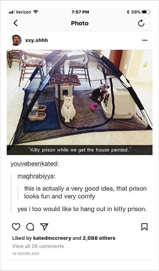 Kitty Prison OR Acclimation Tent -- Use it to keep kitty safe and out of the way when working on a big house project ... OR ... Let the kitty get used to its new surroundings when moving.