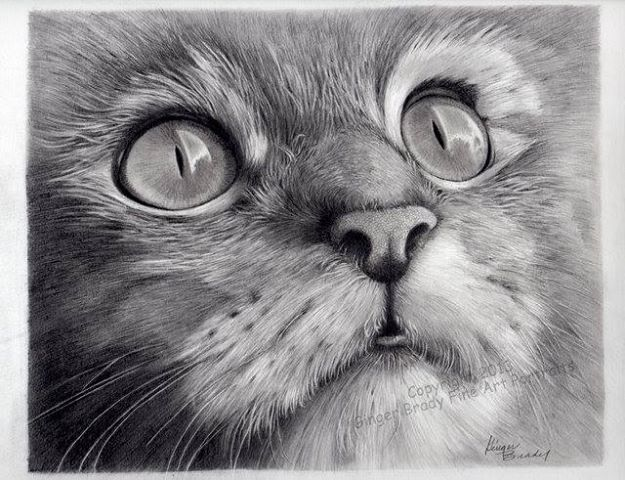 how to draw a realistic cat face on black paper